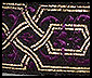 celtic maze, purple